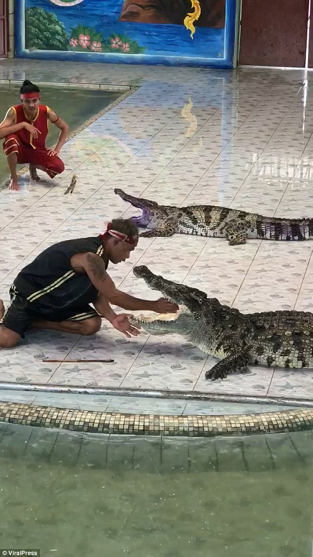 A reptile handler was attacked by a crocodile in front of horrified spectators after he put his arm inside the creature¿s mouth in Thailand