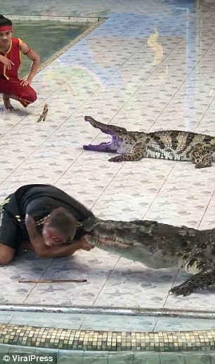 As he reached inside the crocodile's jaws while another keeper looks on, Tao looked at the audience and told the announcer to stop the music
