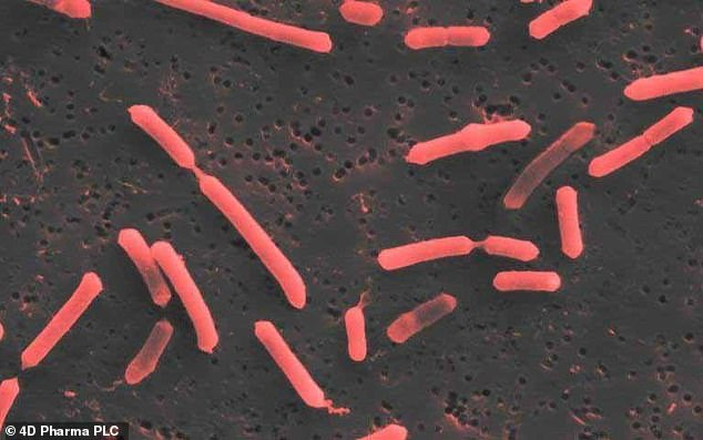 Single strains of bacteria can be used to treat incurable conditions such as Alzheimer's, Parkinson's disease and cancer, scientists believe