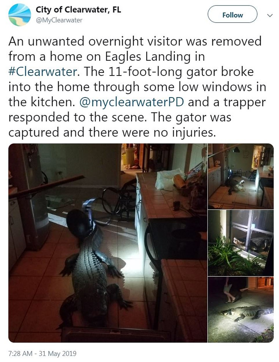The City of Clearwater shared the incredible photos of the unwanted overnight visitor on social media